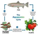 aquaponics-icon